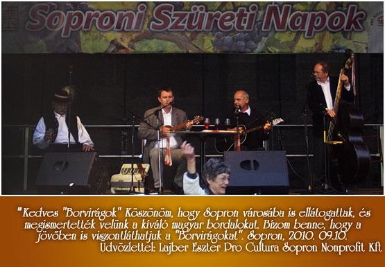 Lajber Eszter Pro Cultura Sopron Nonprofit Kft.